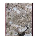 Cherry Blossom Folio