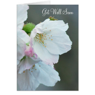 Cherry blossom get well card