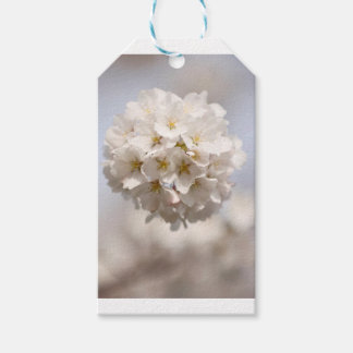 Cherry Blossom Gift Tags
