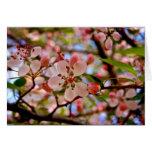 Cherry Blossom [Greeting Card]