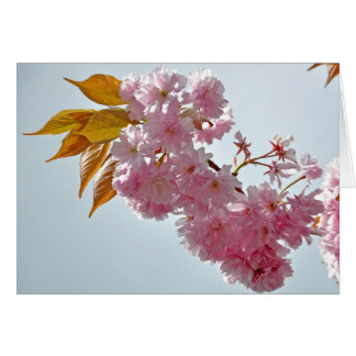 Cherry Blossom Greeting Cards