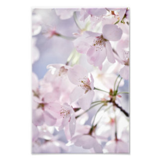 Cherry Blossom in Light Pink and Blue Photo Print