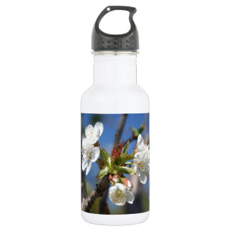 Cherry Blossom In Spring Sunlight Stainless Steel Water Bottle