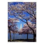 Cherry blossom in Washington DC Card