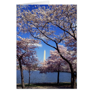 Cherry blossom in Washington DC Cards