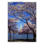 Cherry blossom in Washington DC Greeting Card