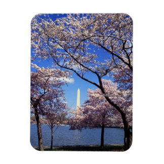 Cherry blossom in Washington DC Magnet