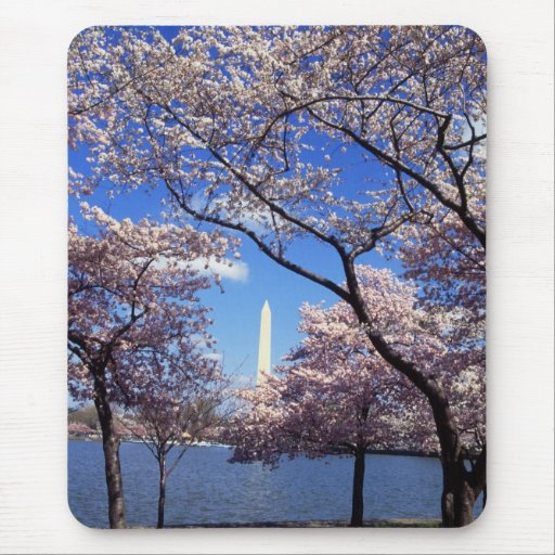 Cherry blossom in Washington DC Mouse Pad