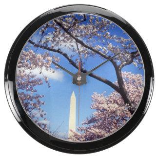 Cherry blossom in Washington DC Photo Aquarium Clocks