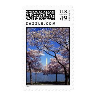 Cherry blossom in Washington DC Postage Stamp