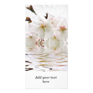Cherry blossom in water photo cards