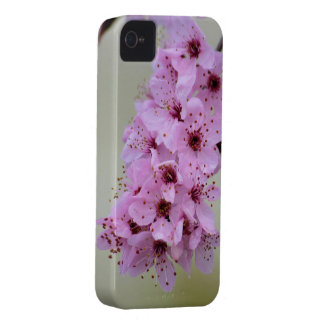 Cherry Blossom iPhone 4 Cover