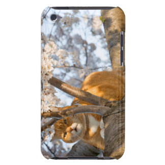 Cherry Blossom Kitty Barely There iPod Cover