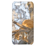 Cherry Blossom Kitty Case For iPhone 5C