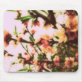 Cherry blossom mousepads