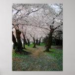 Cherry Blossom Path 12x16 Poster