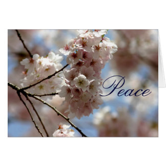 Cherry blossom peace at Easter greeting Card