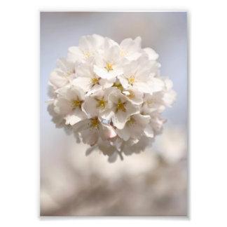Cherry Blossom Photo Print