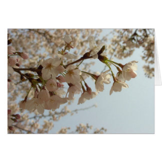 Cherry blossom pink cards