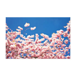 Cherry Blossom Pink Poster Canvas Print