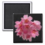 Cherry Blossom Pink Tree Flower Fridge Magnets