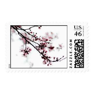 Cherry Blossom Stamp