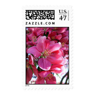 Cherry Blossom Postage Stamps
