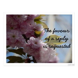 cherry blossom Postcard