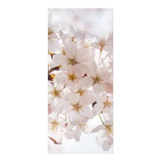 Cherry Blossom Rack Card