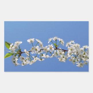 Cherry blossom Rectangle Sticker