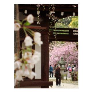 Cherry Blossom Reflections Postcard