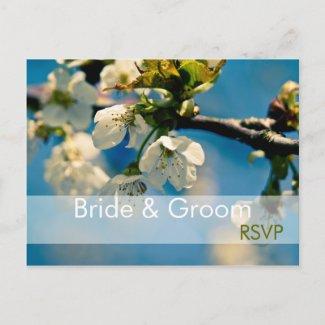 Cherry Blossom • RSVP Postcard postcard
