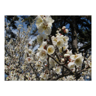 Cherry Blossom / Sakura / サクラ(桜) Poster