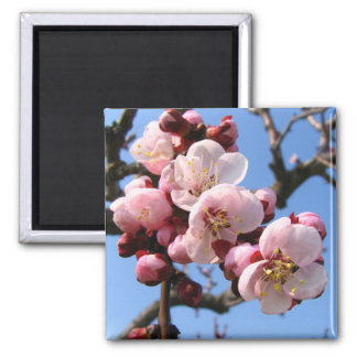 Cherry Blossom Sakura Fridge Magnet