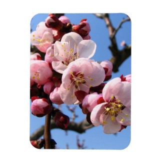 Cherry Blossom Sakura Vinyl Magnets