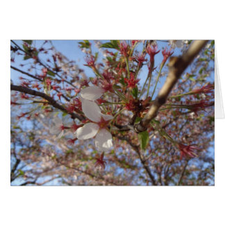 Cherry Blossom Spring Greeting Card