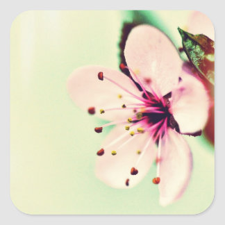 Cherry Blossom Stickers