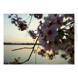 Cherry Blossom Sunset in Washington DC Card