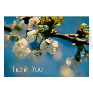 Cherry Blossom • Thank You Card