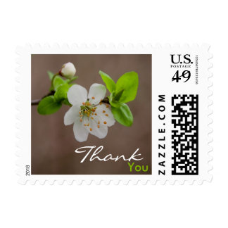 Cherry Blossom • Thank You Stamp