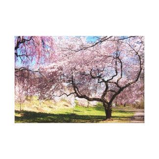 Cherry Blossom Trail Canvas Print