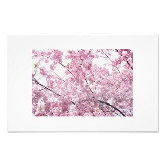 cherry blossom tree photo print