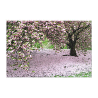 cherry blossom tree wrapped canvas stretched canvas print