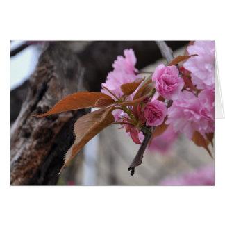 cherry blossom twig card