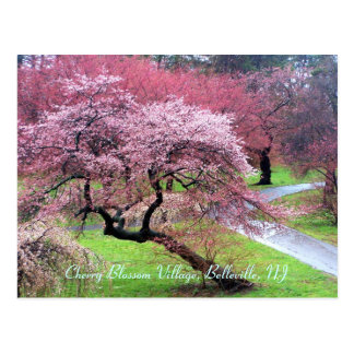 Cherry Blossom Village 05 Postcard