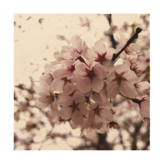 cherry blossom wall wood print