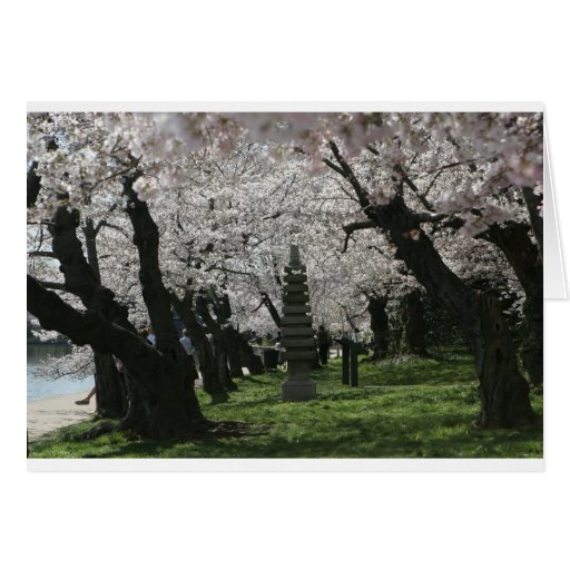 Cherry Blossom Washington DC Card