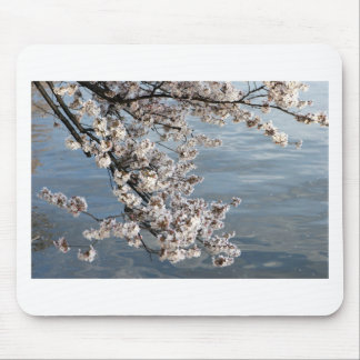 Cherry Blossom Washington DC Mouse Pad