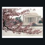 "Cherry Blossom Washington DC Postcard<br><div class=""desc"">Cherry Blossoms full bloom  Tidal Basin in Washington DC.</div>"