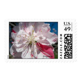 Cherry Blossom Wedding Postage Postage Stamps